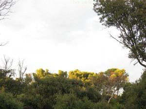 Arbres au Parc Areca au naturel
