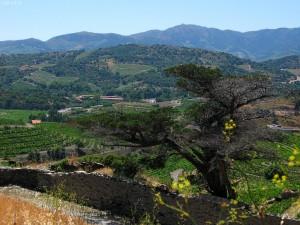 Banyuls et Cerbère