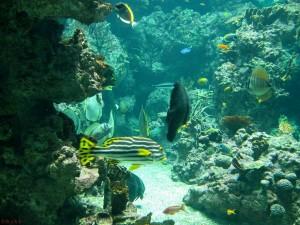 Aquarium de Montpellier